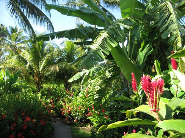 Jardin des bungalows Guadeloupe