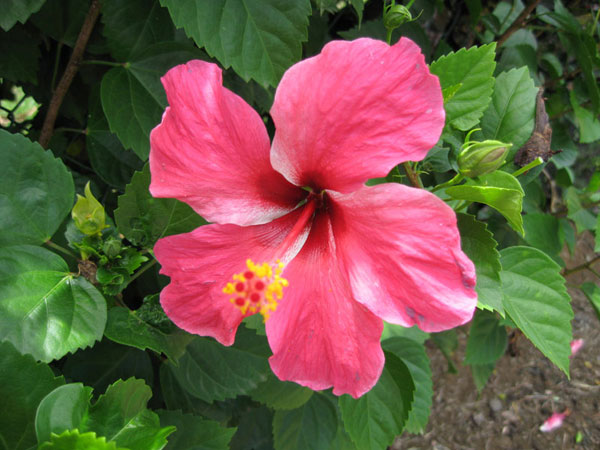 Our botanical garden fleurs des iles for Les noms des fleurs
