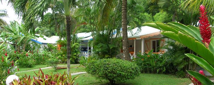 Location bungalow deshaies location fleurs des iles for Jardin tropical guadeloupe