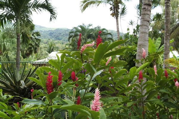 Jardin botanique deshaies location bungalow deshaies for Jardin botanique guadeloupe