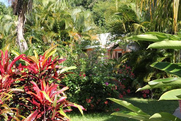 Location fleurs des iles bungalow guadeloupe le jardin for Jardin tropical guadeloupe
