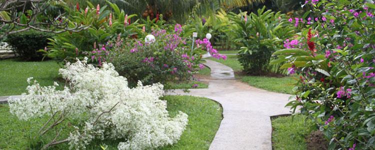 Jardin botanique deshaies location bungalow deshaies for Le jardin des fleurs