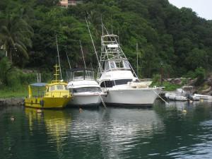 Peche au gros Guadeloupe