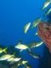 Les fonds marins de la Guadeloupe