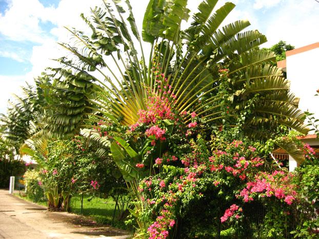 Location Bungalow Deshaies Le Jardin Fleurs Des Iles