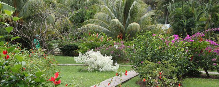 Fleurs des iles le jardin for Le jardin des fleurs talence